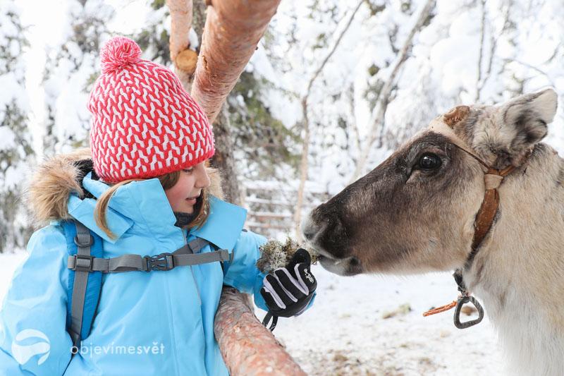 Krmení sobů ve Finsku