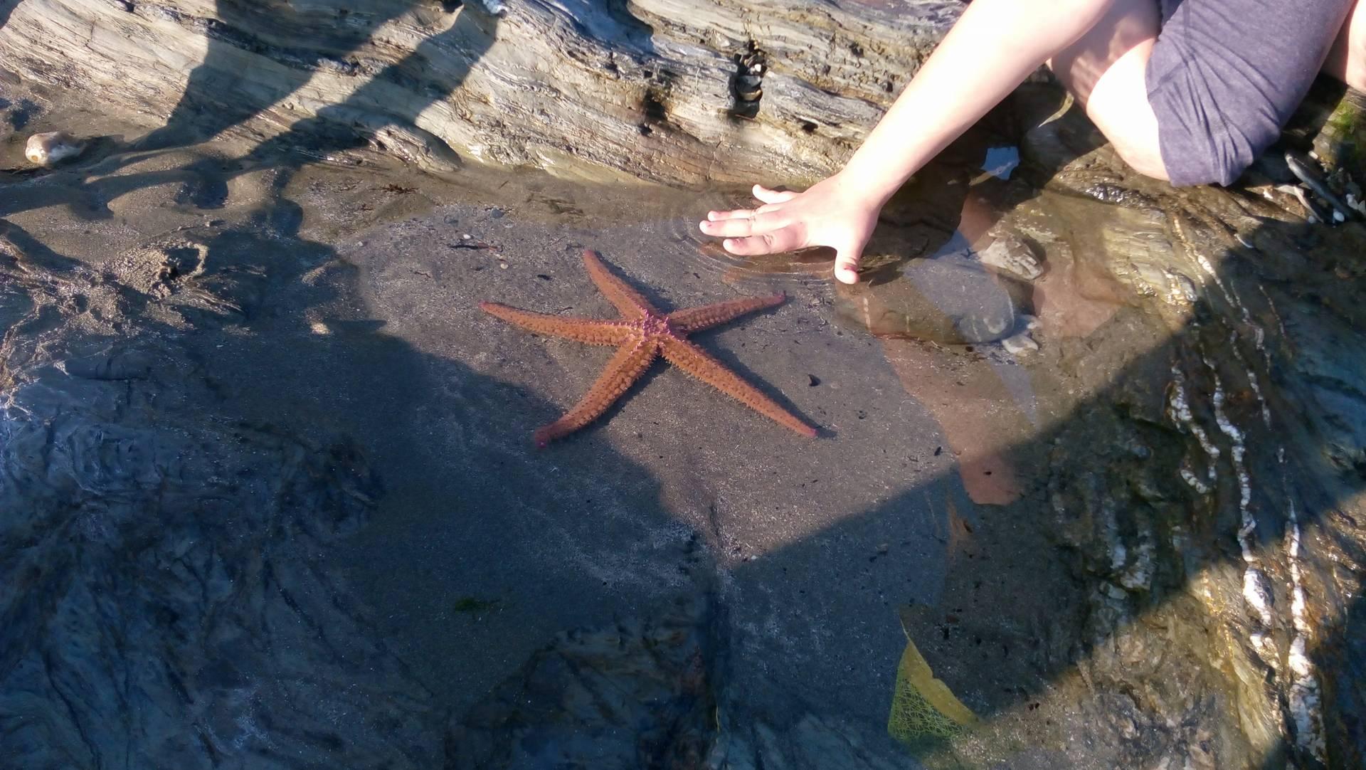 Hvězdice v Cornwallu