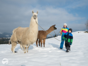 Lama treking s dětmi