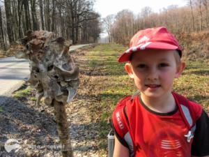Na výlet s dětmi do Ždánického lesa