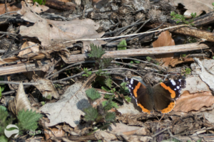 Naučná stezka Motýlí ráj