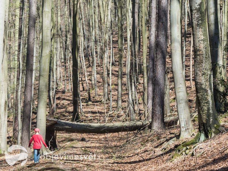 Sami v lese...
